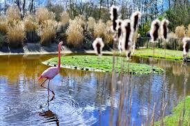 Trouwen in Friesland Zoo
