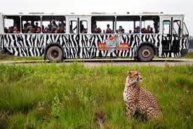 Trouwen in Safaripark Beekse bergen Hilvarenbeek