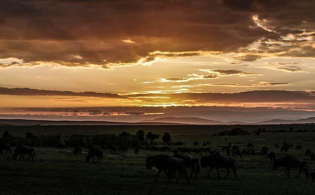 Afrika Masai