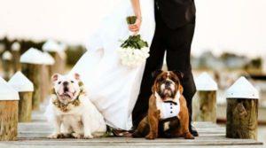 Tips je hond mee naar de bruiloft