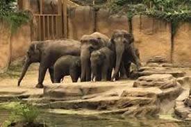 Trouwen dierenpark Wildlands